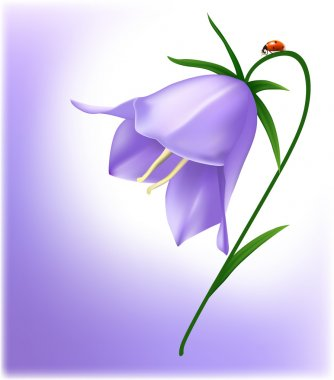 Bluebell with ladybug. stock vector