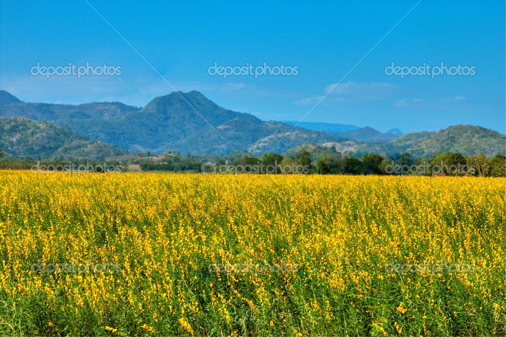 Beautiful fields yellow flowers stock photo tiverylucky 51264873 beautiful fields yellow flowers and mountain with blue sky background photo by tiverylucky mightylinksfo