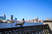 Fényképek A galamb, a háttérben a központi, vízparti Yekaterinbu