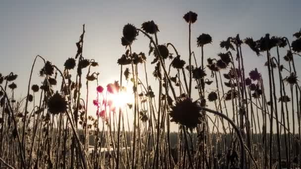 slunce ráno
