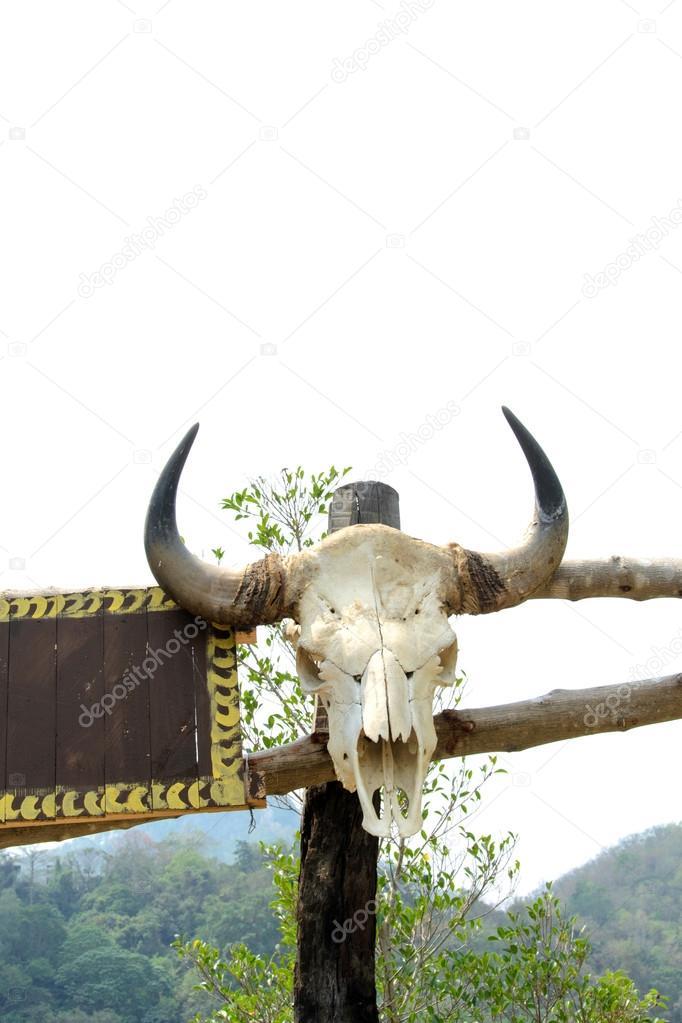 cráneo del búfalo — Foto de stock © myubean #20615879