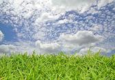 zelené trávě s cloud v modré obloze