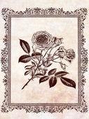 astrazione rosa floreale vintage