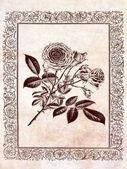 rosa floreale vintage