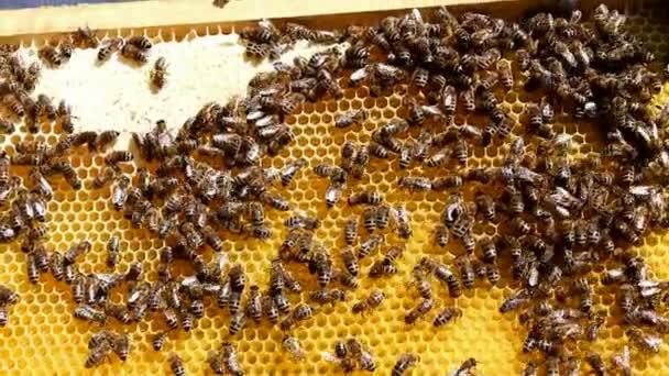 méhek a méhsejt