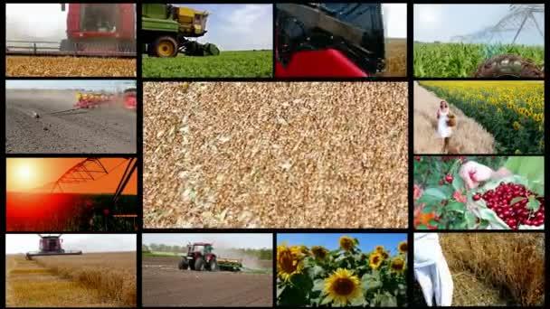 zemědělství multi obrazovky