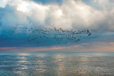 Flock of birds on seascape with blue sky