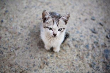 sad little homeless kitten