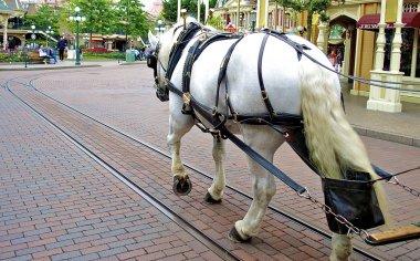 White horse in Disneyland