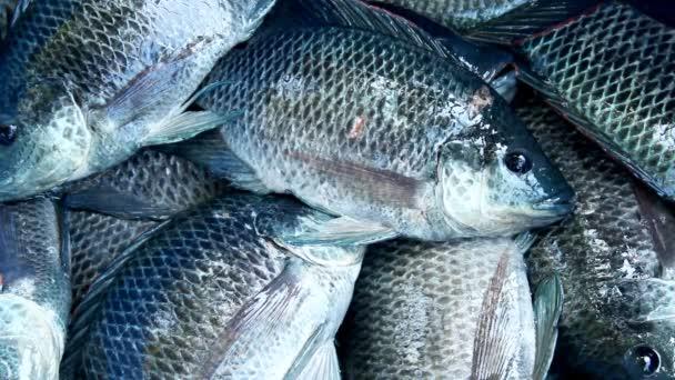 čerstvé ryby