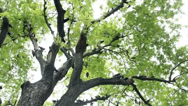 Holub ptáček na stromě