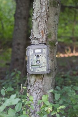 Camouflage Trail Cam on Pine Tree for Deer Hunting