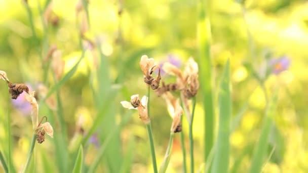 divoké rostliny