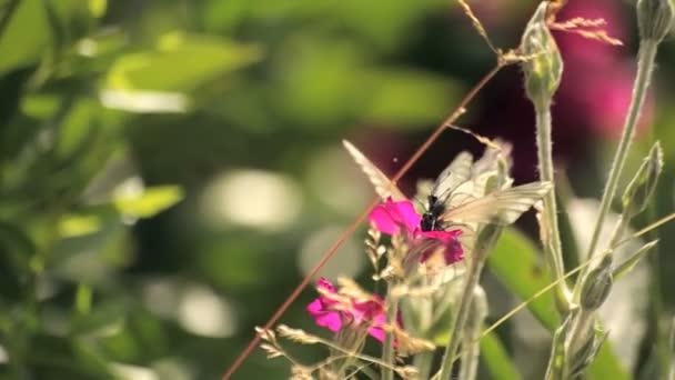 spousta motýlů na jeden květ