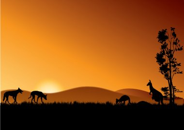 dingo and kangaroos in sunset