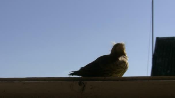 Baby Vogel fliegt weg
