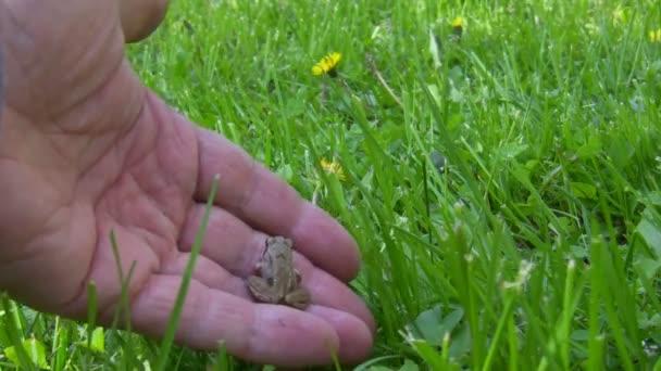 Baby žabku zpět do přirozené prostředí