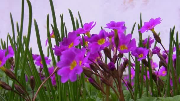 Bee a fialové květy, samostatný