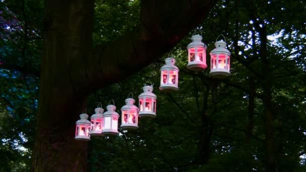 Magic lucerny