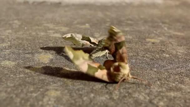 férfi moly levelek női fújt a szél