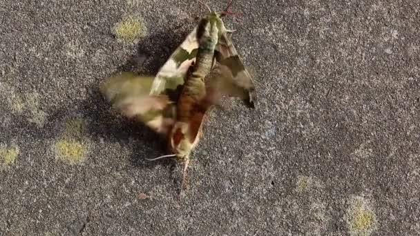 Fedeztetési rovarokkal. férfi húzási női el