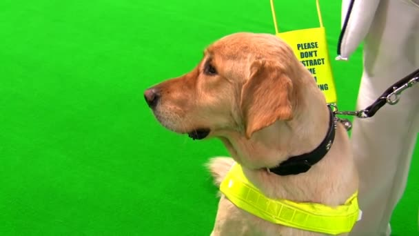 More than 1. 7 million views for guide dogs video in first four.