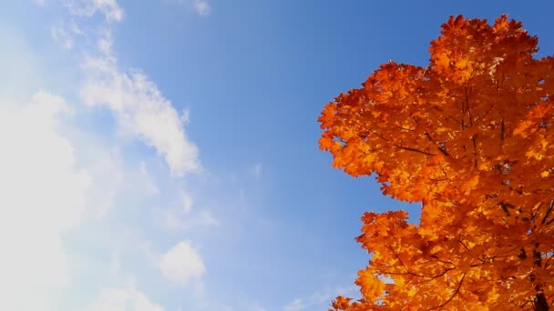 Autumn tree against bright blue sky