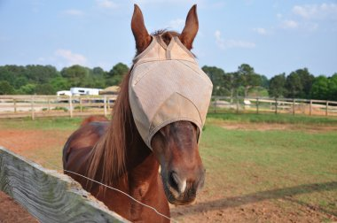 Horse with flymask