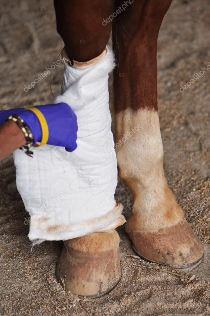 Horse Leg Injury Treatment