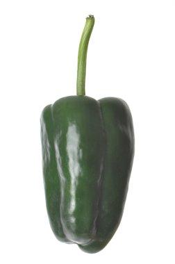 Isolated Poblano Pepper