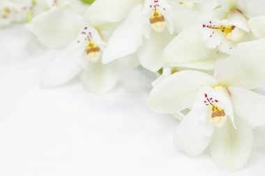 White orchids flowers