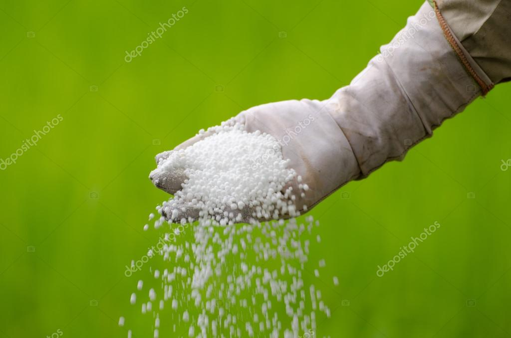 Farmer is pouring chemical fertilizer