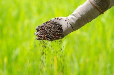 Plant fertilizer on farmer hand