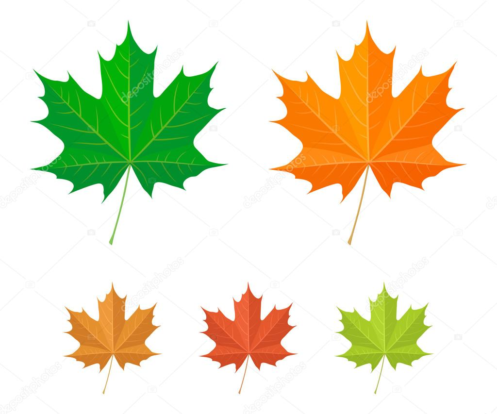 Maple leaf icons