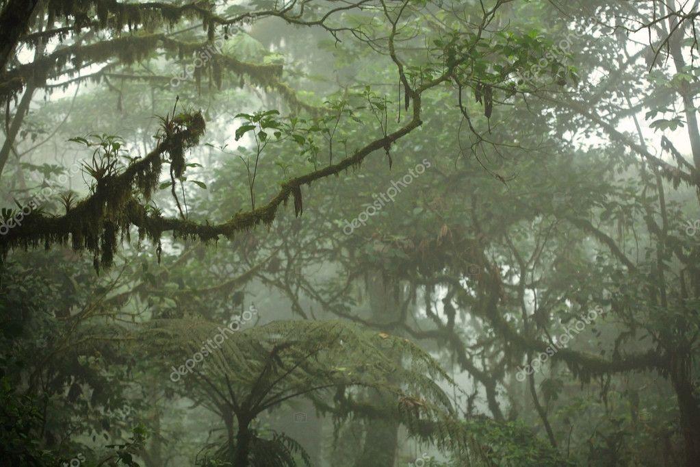 Tropical Rain Forest Canopy u2014 Stock Photo & Tropical Rain Forest Canopy u2014 Stock Photo © mtilghma #13838241