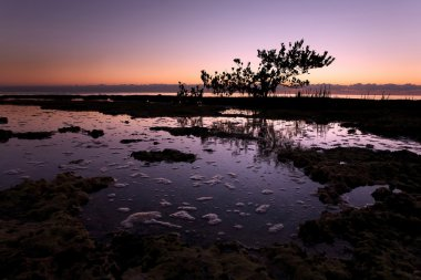 Mangrove Tree in Early Morning