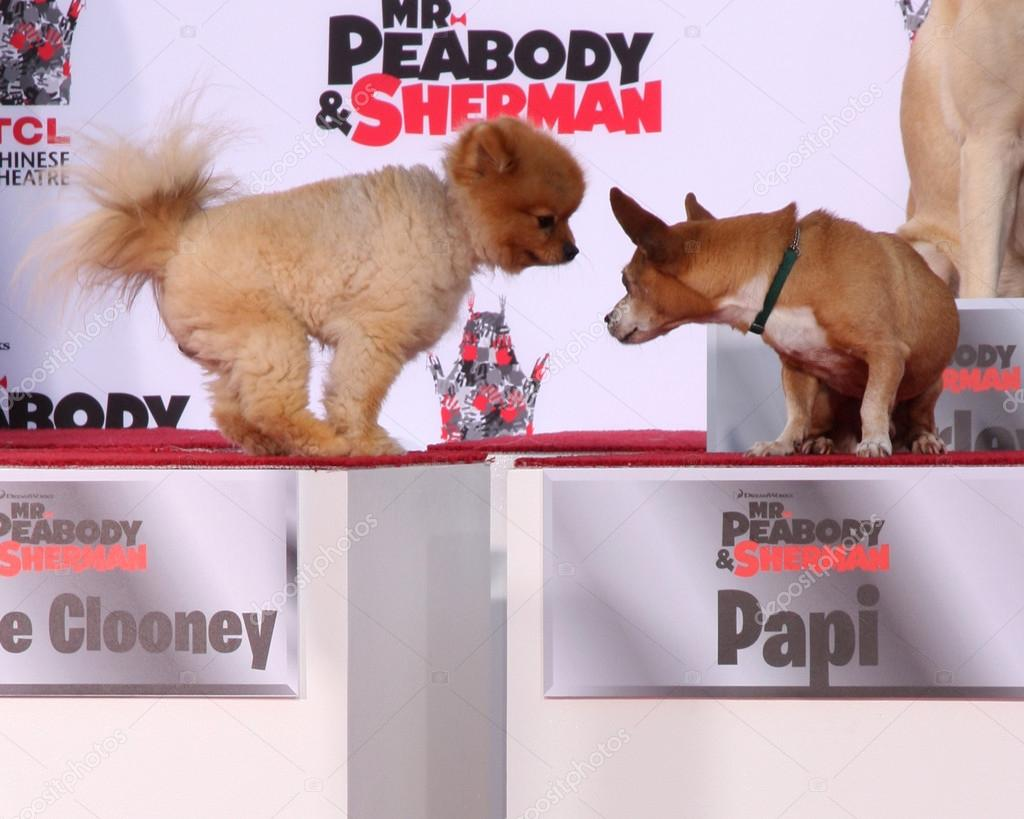 George Clooney The Dog Papi Stock Editorial Photo C Jean Nelson