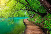 mély erdei patak a napsütésben, kristálytiszta vízzel. Plitvicei-tavak, Horvátország
