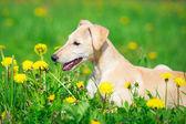 Állat-kutya