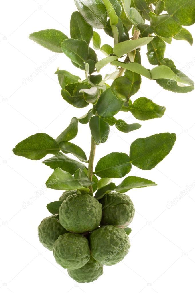 Kaffir lime , bergamot fruit