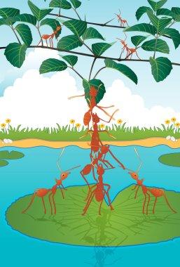 Tolerance of ants
