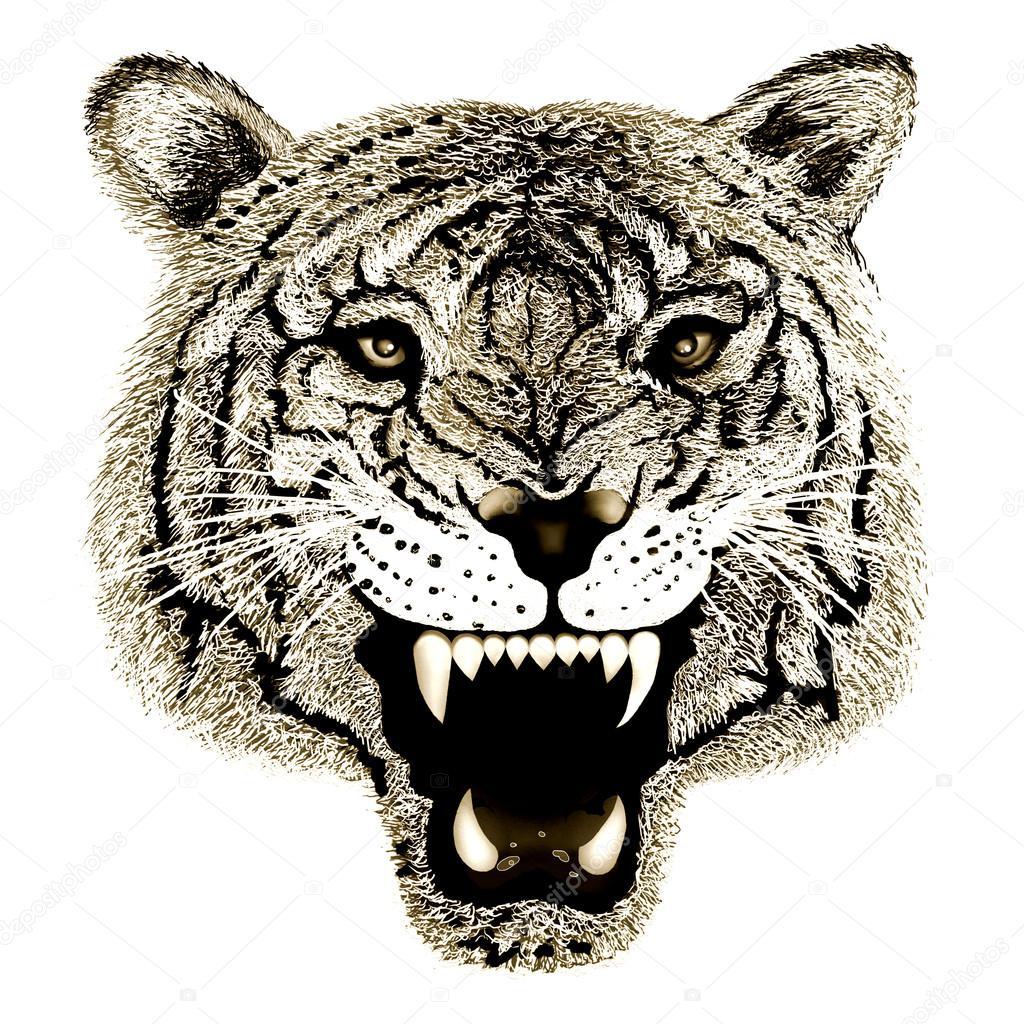 Dessin De Tête De Tigre Noir Et Blanc à La Main Photographie