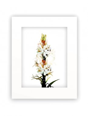 Tuberose Flowers in White Frame