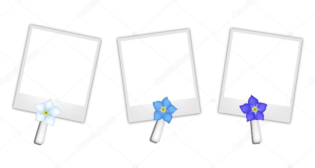 Blank Photos with Forget Me not Flowers