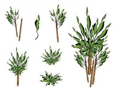 A Set of Isometric Yucca Tree or Dracaena Plant