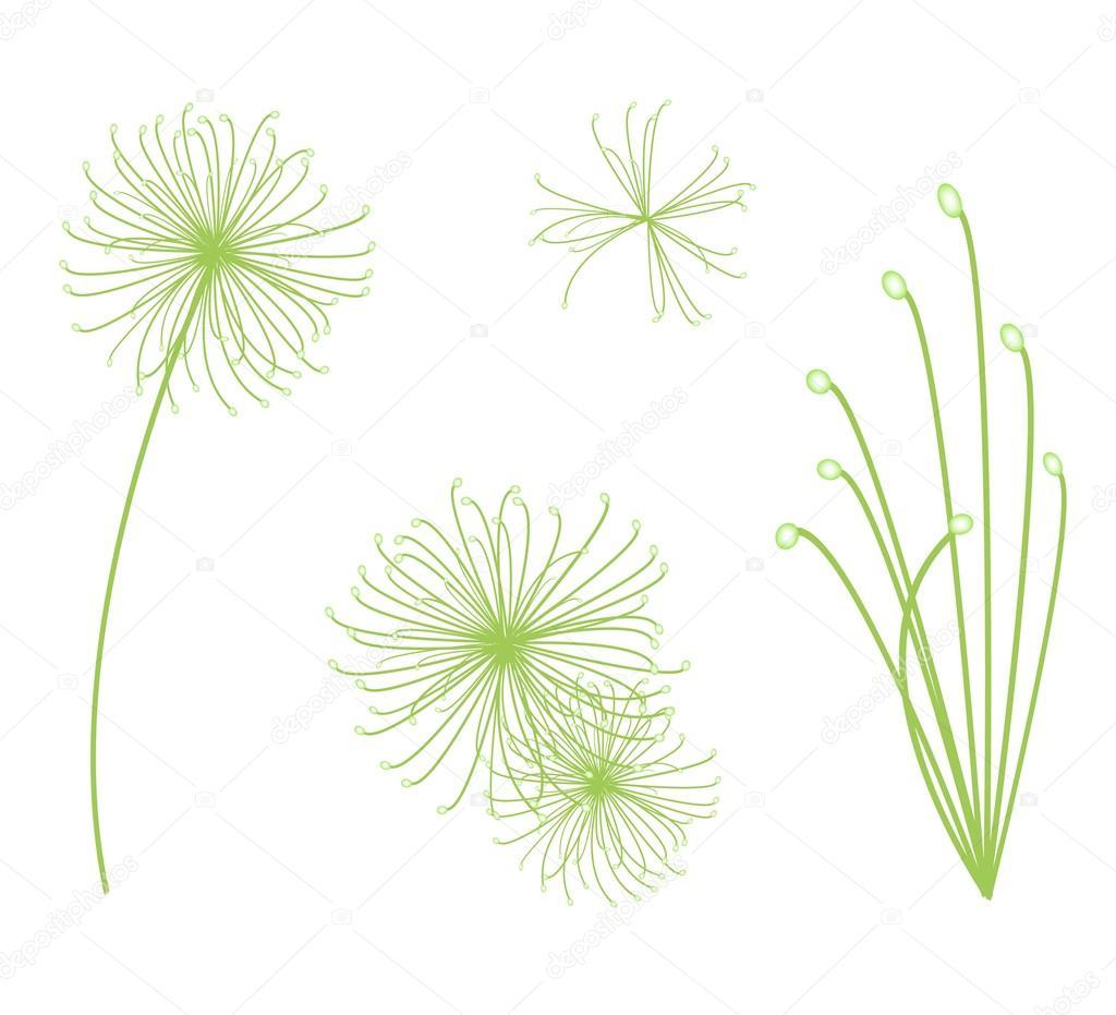 La Valeur De Cyperus Papyrus Plante Sur Fond Blanc Image