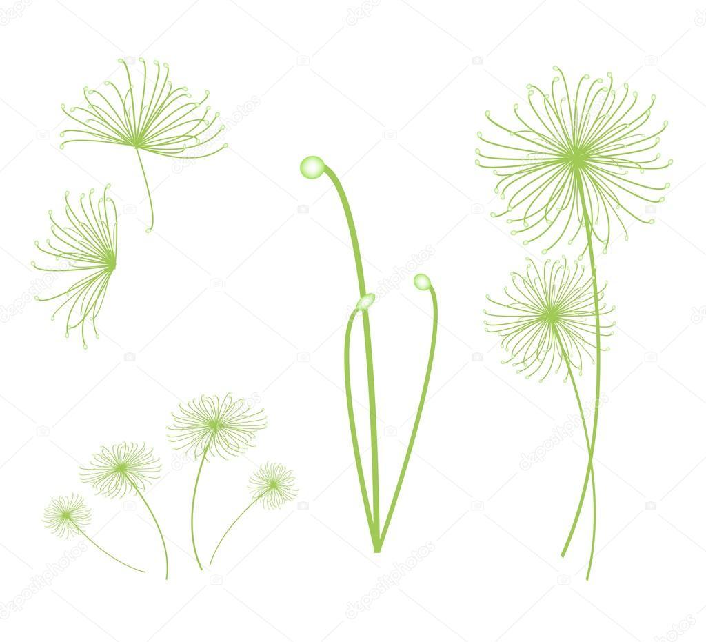 Un Ensemble De Cyperus Papyrus Plante Sur Fond Blanc Image