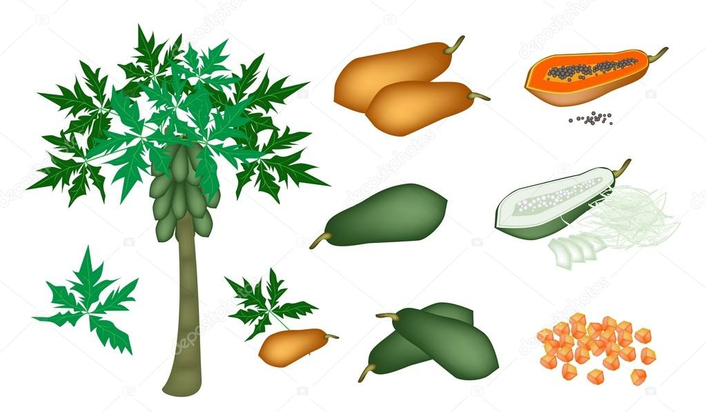 A Set of Fresh Papayas and Papaya Tree