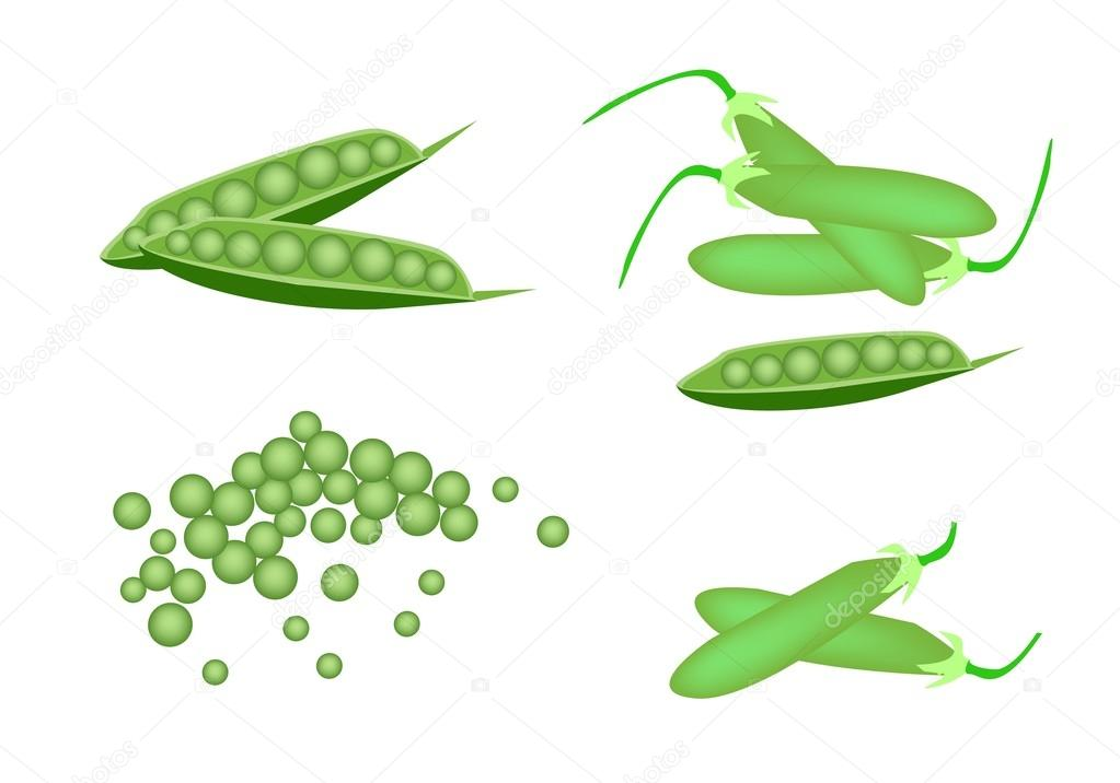 A Set of Delicious Sweet Green Pea