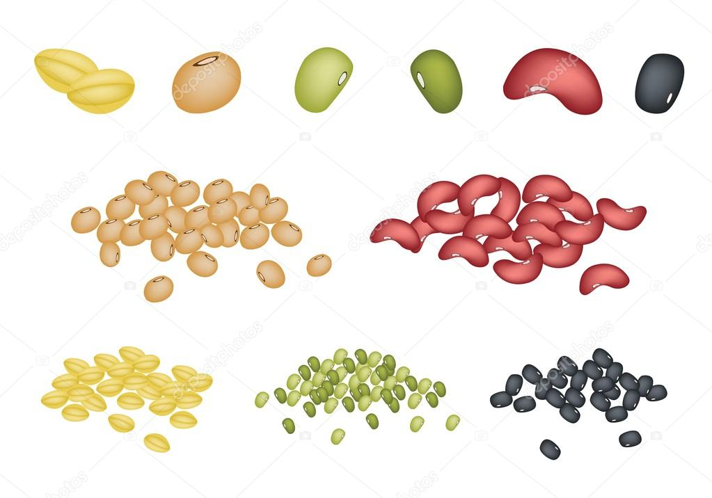 Set of Different Beans on White Background